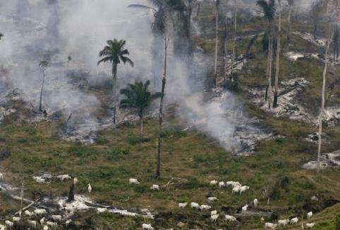 Foto Greenpeace Daniel Beltra - Estudo lançado na COP23 indica caminhos para o Brasil zerar o desmatamento na Amazônia