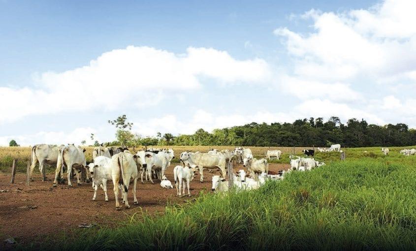 Frigorificos desmatamento foto 845x510 - É necessário mais pressão para que os acordos de empresas frigoríficas sejam efetivos contra o desmatamento na Amazônia Legal