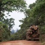 Simex Adriano Gambarini 150x150 - Sistema de Monitoramento da Exploração Madeireira (Simex): Estado do Pará 2015-2016