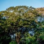 Utinga jun2016 47 150x150 - Edital para Contratação de Consultoria em Inovação Tecnológica para o design dos Laboratórios Criativos da Amazônia