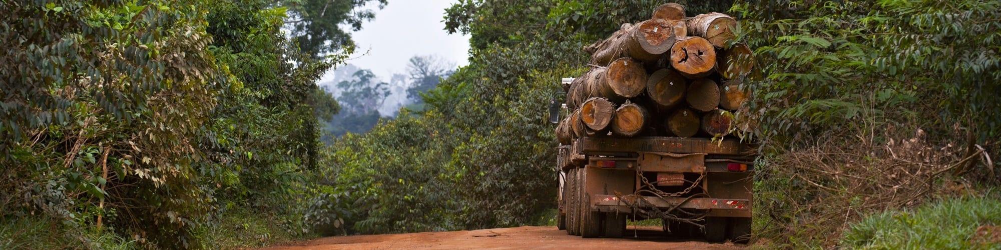 crimes ambientais - Crimes Ambientais