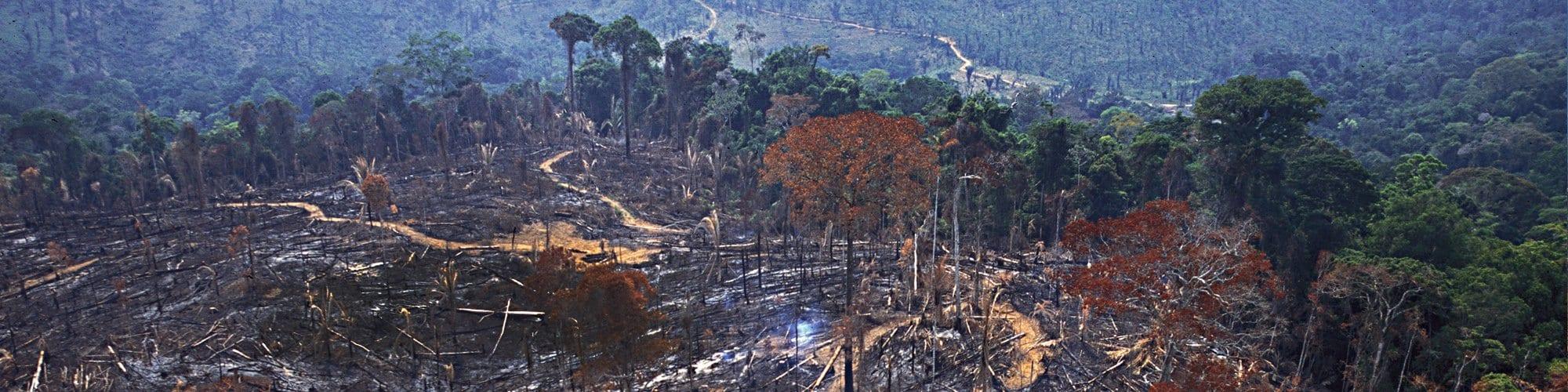 desmatamento3 - Deforestation