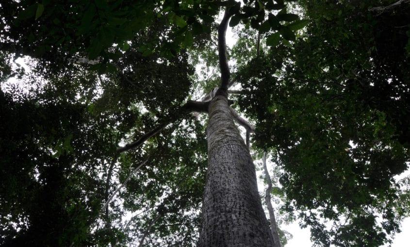 flonatapajos brenda1 845x510 - Em carta aberta, ONGs pedem que o Governo não leve adiante a proposta de redução das Unidades de Conservação do sul do Amazonas