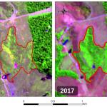 Paragominas PA 150x150 - #ImagemDoDia: Alta resiliência da floresta amazônica favorece recomposição de passivos florestais