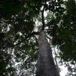 flonatapajos brenda 150x150 - #ImagemDoDia: Terras Indígenas garantem direitos e protegem florestas