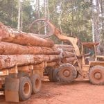 l9Tr9o2k 150x150 - Estudo indica que a maior parte da exploração madeireira no Pará não possui autorização