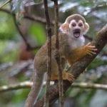 IMG 3248 150x150 - Área rica em espécies da fauna silvestre é diagnosticada em Juruti