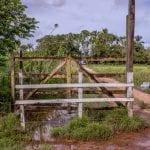 brendaartigosite 1 150x150 - Estudo indica prejuízo de R$ 118 bilhões ao país com a privatização de terras na Amazônia