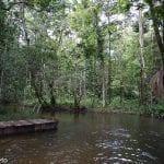 floresta em APP 150x150 - Áreas Protegidas na Amazônia estão sob risco de Ameaça e Pressão