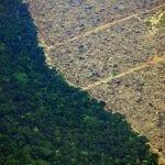 15713522945da8eee634b7f 1571352294 3x2 md 150x150 - #ImazonNaMídia: Se Amazônia virasse pasto, região ficaria 5,5ºC mais quente e continente teria menos chuva (Folha de São Paulo)