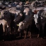 17052016 Novo Campo   08MVI 0013 1 150x150 - #ImazonNaMídia: MPF requer multa de R$ 3,8 milhões a frigoríficos que descumpriram acordo do Carne Legal no AM (Ministério Público Federal)