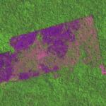Captura de Tela 2019 10 03 às 11.57.35 150x150 - #ImagemDoDia: Satélites mostram o avanço do desmatamento em Unidade de Conservação em Altamira, no Pará