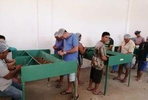 WhatsApp Image 2019 08 28 at 09.37.34 e1570538902334 300x203 - Territórios Sustentáveis promove capacitação em beneficiamento de castanha-do-pará em comunidade do Baixo Amazonas