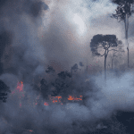 AAA16318 150x150 - #ImazonInTheMedia: Brazil's Amazon Is Under Threat from Proposed Land-Use Laws (Americas Quarterly)