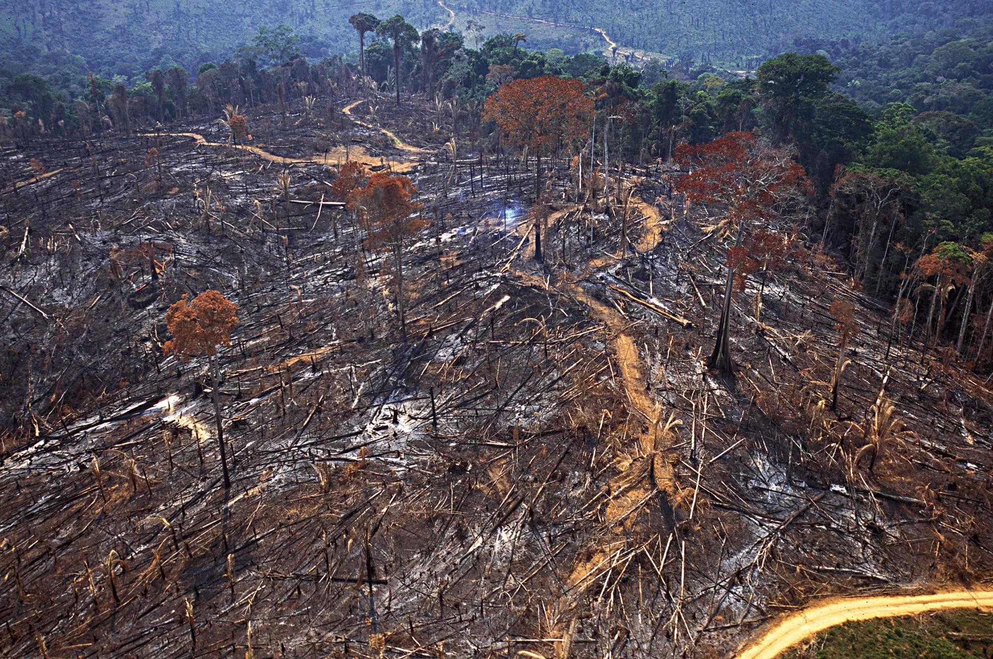 dev01157 Araquem de Alcantaram 1 - #ImazonInTheMedia: Bills before Brazil Congress slammed for rewarding Amazon land grabbers (Mongabay)