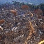 dev01157 Araquem de Alcantaram 150x150 - Desmatamento na Amazônia aumenta 212% em outubro deste ano, aponta Imazon