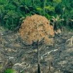 imagem 150x150 1 - Tragédia anunciada: organizações alertam para explosão do desmatamento na Amazônia Legal