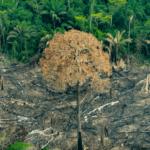 imagem 150x150 - Tragédia anunciada: organizações alertam para explosão do desmatamento na Amazônia Legal