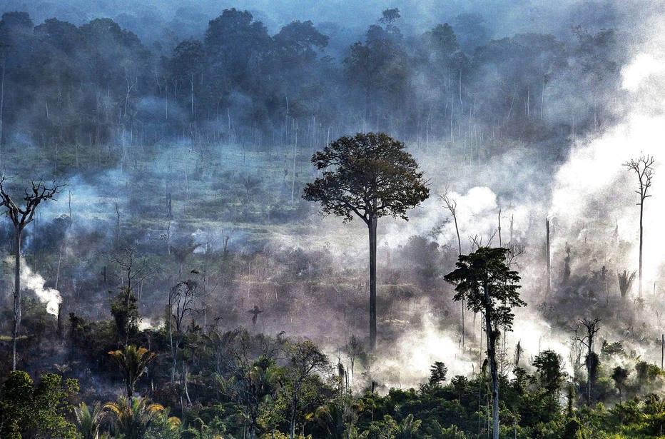 1592393446144 - Relatório reúne recomendações de sete instituições ao Plano Estadual Amazônia Agora, do governo do Pará