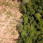 AdobeStock 201141165 150x150 - #ImazonNaMídia: Microsoft e Imazon vão usar IA para combater desmatamento na Amazônia (Revista Época)