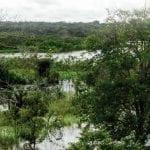 capa publicacao 150x150 1 - Norte do Pará: Situação Atual e Perspectivas para o Desenvolvimento Sustentável