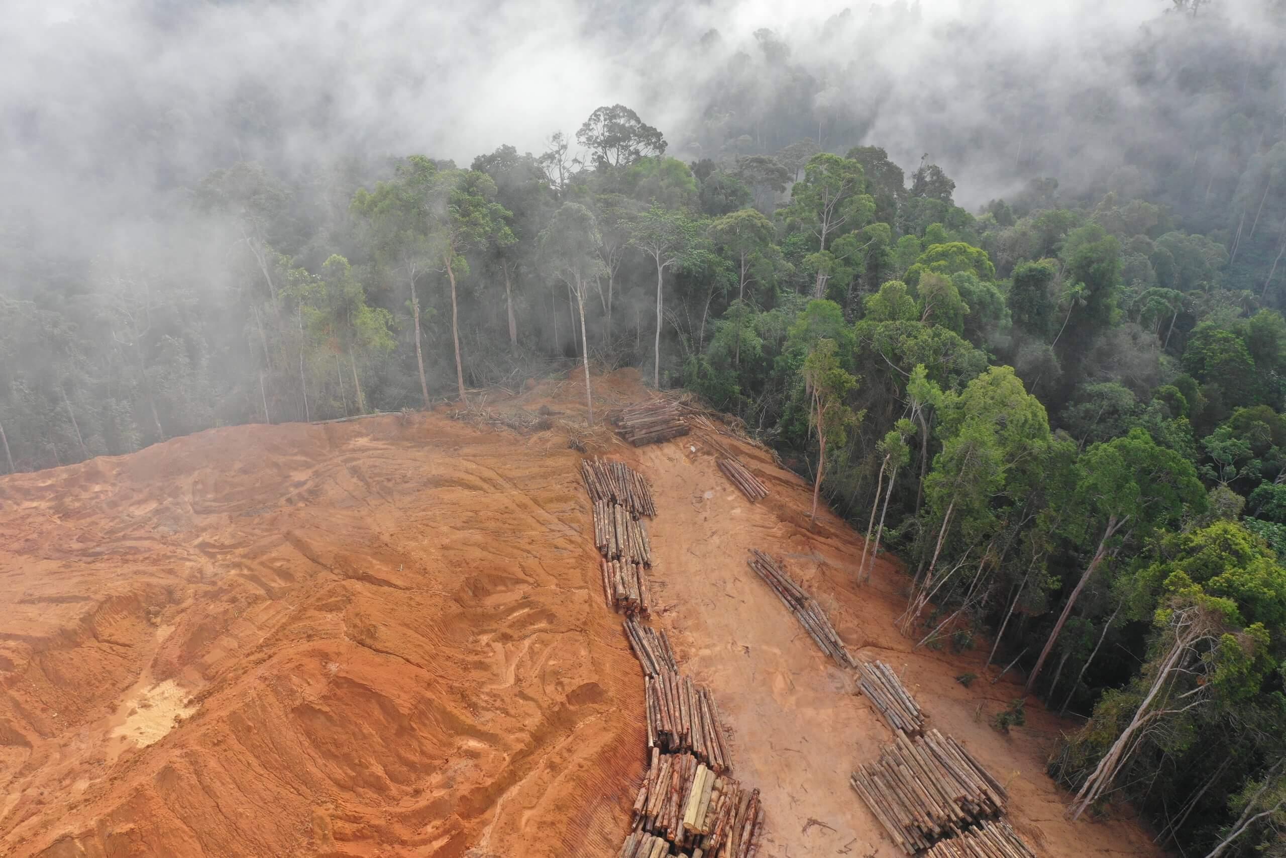 AdobeStock 269685600 scaled - Estudo lista seis mudanças que precisam ser feitas nas leis de terras para proteger a Amazônia