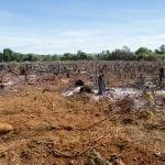 AdobeStock 289092519 150x150 - Devastação na Amazônia cresce mais de 50% em setembro, aponta Imazon