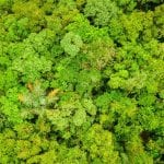 banner home 150x150 - 10 recomendações para a restauração florestal acelerar e ganhar escala na Amazônia