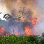 AdobeStock 105731605 150x150 - A Amazônia se deteriorou em oito anos, mostra a análise inédita feita em nove países
