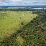 AdobeStock 285269039 150x150 - Resex Chico Mendes, no Acre, e APA do Tapajós, no Pará, lideram o ranking das Áreas de Proteção Ambientais mais ameaçadas de desmatamento, segundo Imazon