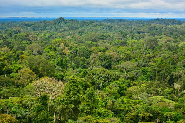 """vista da amazonia 133548 161 - Publicação """"Fatos da Amazônia 2021"""" mostra radiografia atual da região: veja os principais dados"""