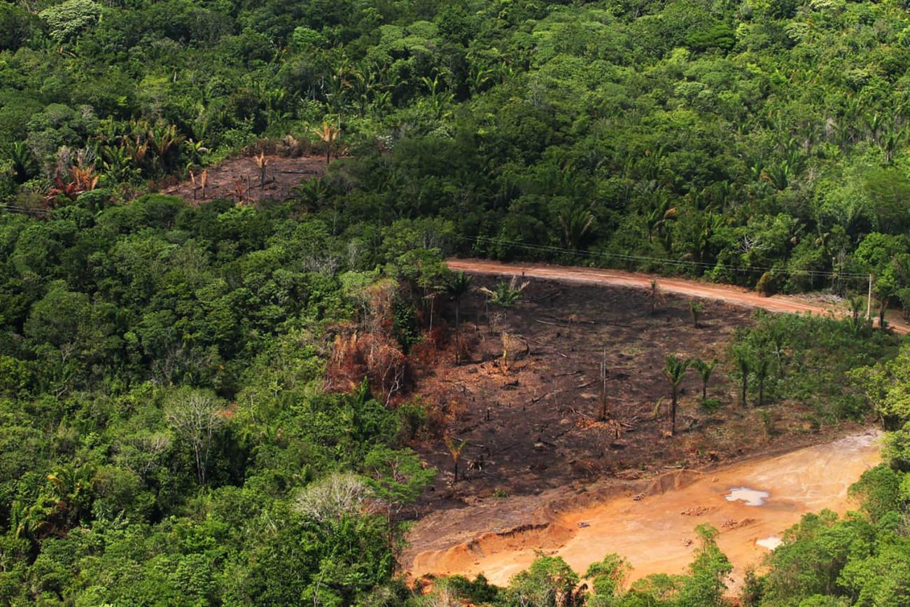 Arquivo Agencia Para - La deforestación en la Amazonía Brasileña fue la mayor en 10 años por el tercer mes consecutivo, de acuerdo con Imazon