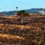 Bruno Cecim Arquivo Agencia Para 150x150 - Pará tem metade das 20 áreas protegidas mais pressionadas e ameaçadas pelo desmatamento na Amazônia