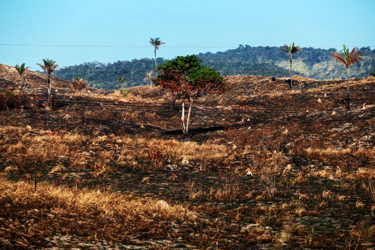 Bruno Cecim Arquivo Agencia Para - Pará tem metade das 20 áreas protegidas mais pressionadas e ameaçadas pelo desmatamento na Amazônia