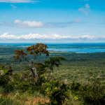 site 150x150 - Instituições ambientais lançam o Portal Proteja, biblioteca virtual sobre áreas protegidas do Brasil