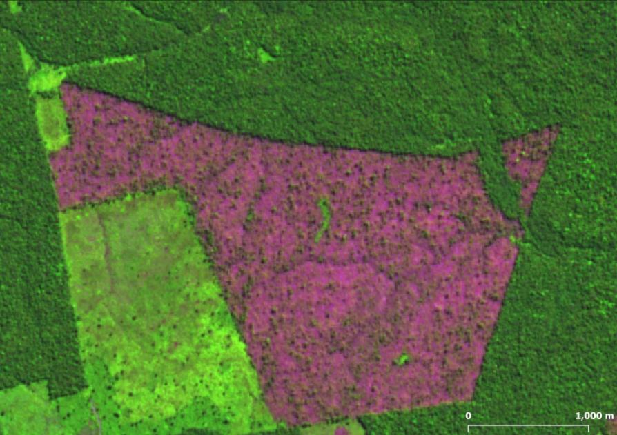 Labrea - Desmatamento acumulado dos últimos 11 meses cresceu 51% na Amazônia, aponta Imazon