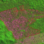 Desmatamento Altamira Julho2021 1 150x150 - Deforestation in the Brazilian Amazon reached 2,095 km² in July, and the last 12 months cumulative is the highest in 10 years