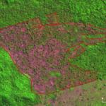 Desmatamento Altamira Julho2021 150x150 - Deforestación en la Amazonía brasileña alcanzó los 2.095 km² en julio, y el acumulado de los últimos 12 meses es el más alto en 10 años