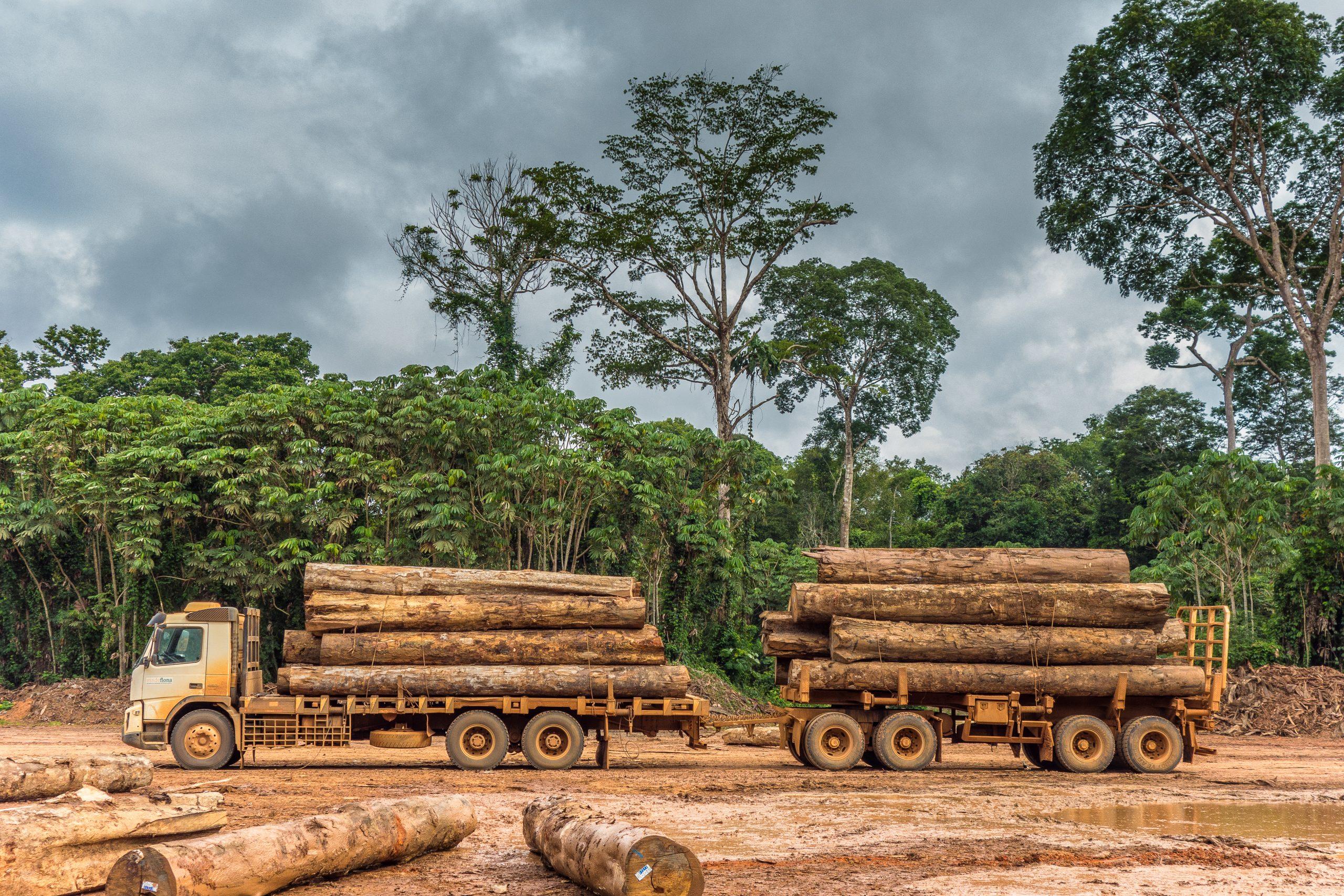 Exploracao de madeira em Rondonia Credito  Vicente Sampaio Imaflora scaled - Exploração madeireira na Amazônia chegou a 464 mil hectares em 12 meses, aponta levantamento inédito