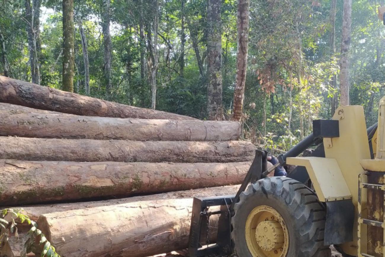 Exploracao madeireira Agencia Para 2021 - Mais da metade da área com exploração madeireira no Pará não foi autorizada pelos órgãos ambientais