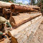 Exploracao madeireira Alex Ribeiro Agencia Para 2021 150x150 - Mais da metade da área com exploração madeireira no Pará não foi autorizada pelos órgãos ambientais