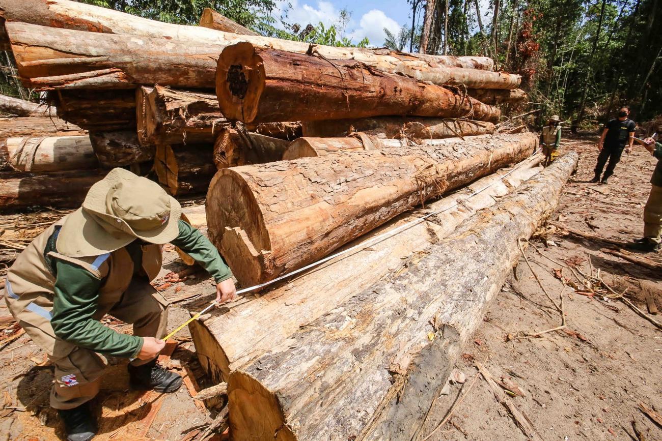 Exploracao madeireira Alex Ribeiro Agencia Para 2021 - Mais da metade da área com exploração madeireira no Pará não foi autorizada pelos órgãos ambientais