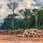 Exploracao madeireira em Rondonia Credito  Vicente Sampaio Imaflora 150x150 - Exploração madeireira na Amazônia chegou a 464 mil hectares em 12 meses, aponta levantamento inédito