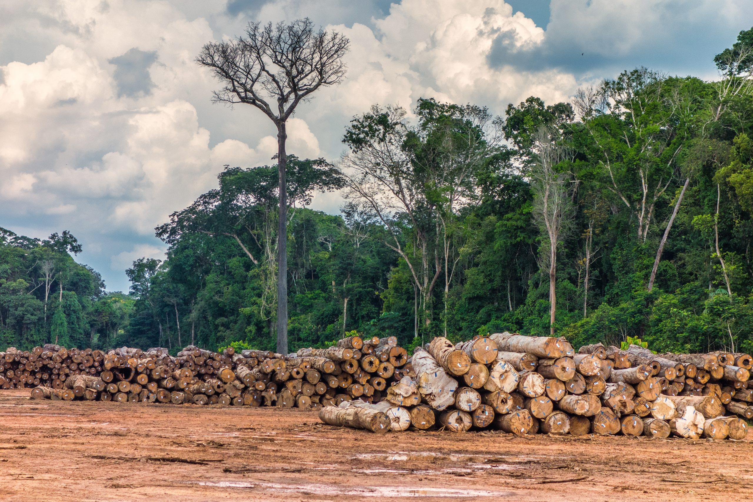 Exploracao madeireira em Rondonia Credito  Vicente Sampaio Imaflora scaled - Exploração madeireira na Amazônia chegou a 464 mil hectares em 12 meses, aponta levantamento inédito