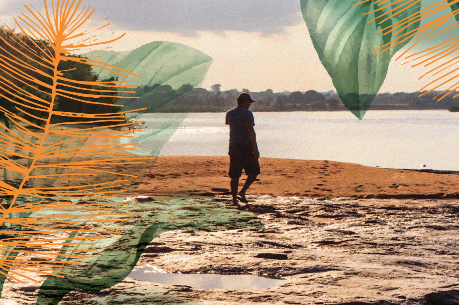 Lambes Imazon Destaque - Dia da Amazônia: Imazon lança série de lambes com imagens e ilustrações do bioma