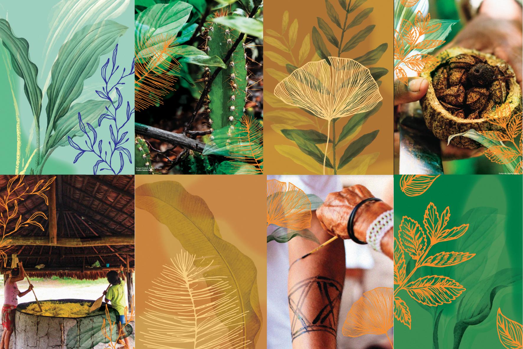 Lambes Imazon Fotos - Dia da Amazônia: Imazon lança série de lambes com imagens e ilustrações do bioma