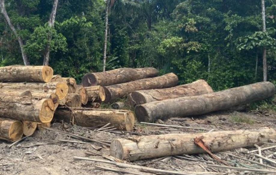 Operacao da PF combate madeira ilegal no Amapa 2020 - Amapá teve exploração madeireira não autorizada em área de quase 100 campos de futebol em um ano