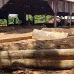 PF combate madeira ilegal no Amapa 2020 150x150 - Sistema de Monitoramento da Exploração Madeireira (Simex): Mapeamento da exploração madeireira no Amapá - Agosto 2019 a Julho 2020