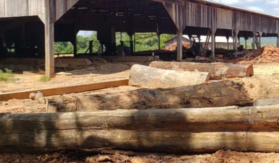 PF combate madeira ilegal no Amapa 2020 - Amapá teve exploração madeireira não autorizada em área de quase 100 campos de futebol em um ano