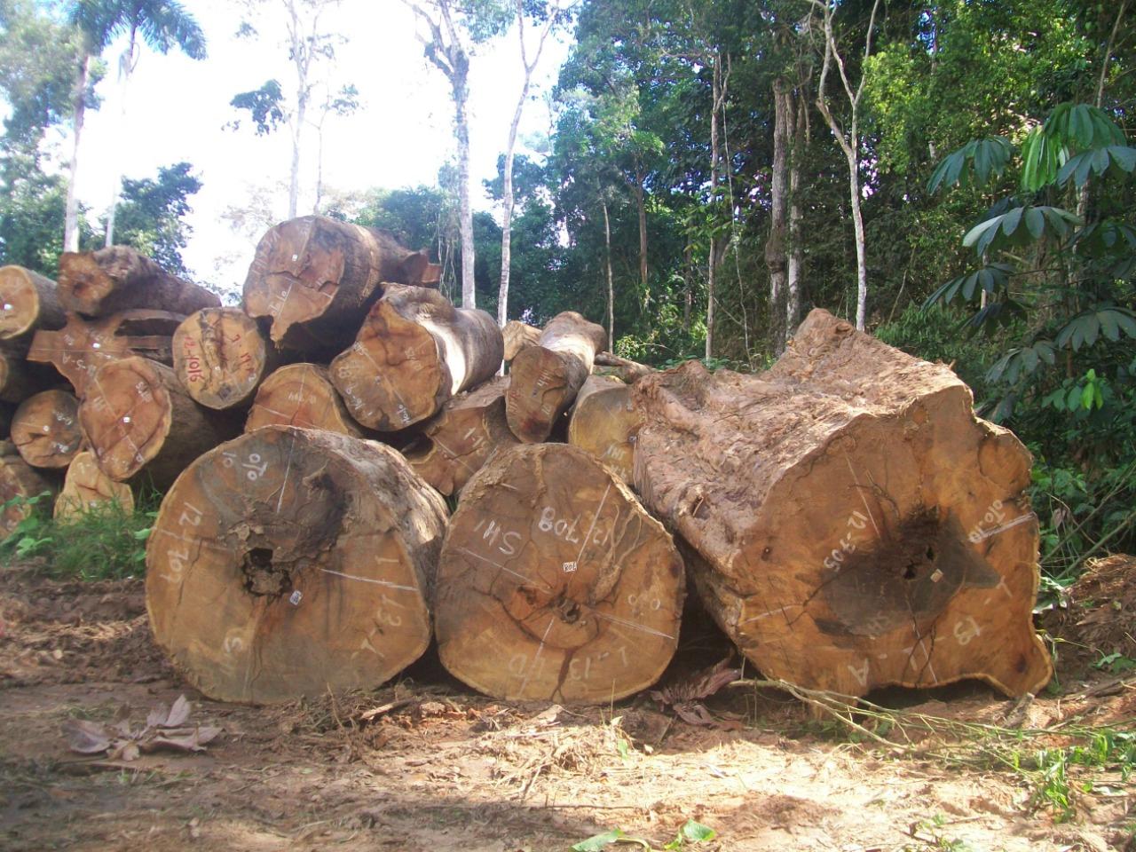 WhatsApp Image 2021 10 08 at 17.14.26 1 - Área com exploração madeireira não autorizada no Amazonas chegou a pelo menos 18 mil campos de futebol em apenas um ano